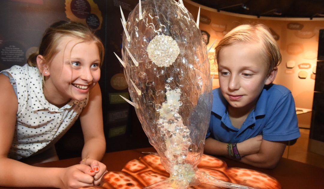 Die dünne Haut der Erde - Besucher in der Ausstellung