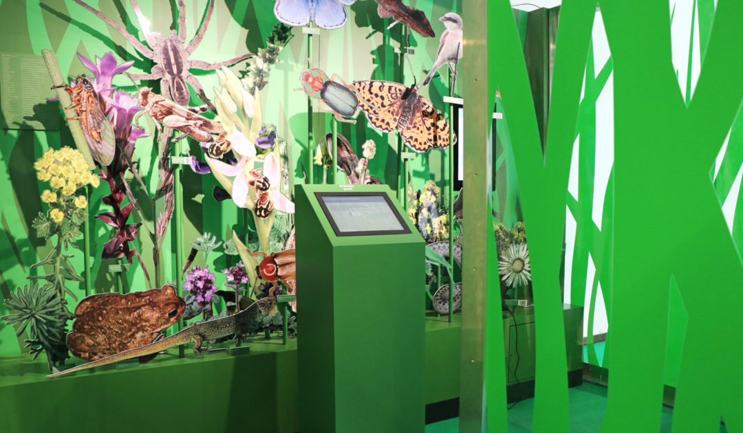 Vielfalt zählt! Ausstellung zur Biodiversität