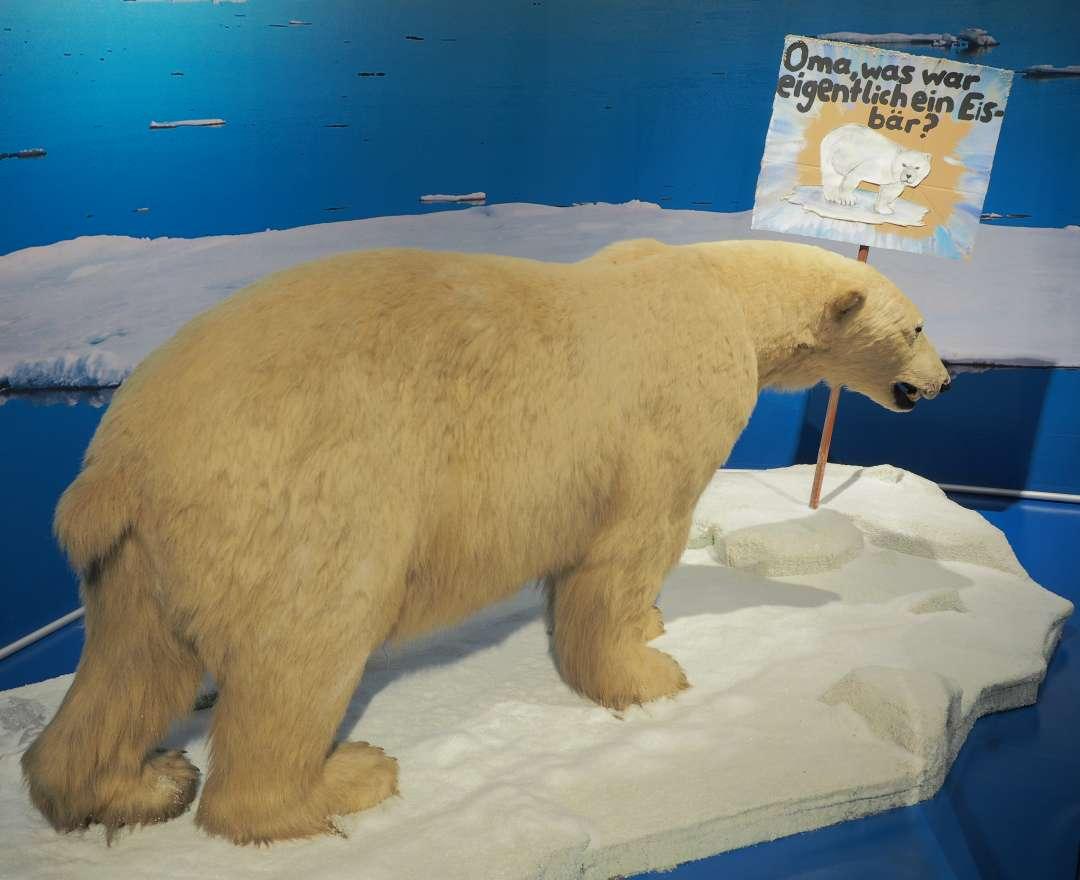 Sonderausstellung TOT wie ein DODO_Eisbär