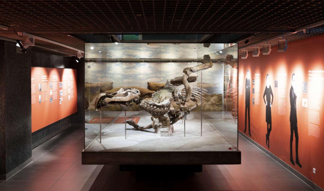 Ausstellungsansichten Museum