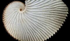 Molluske des Jahres 2021