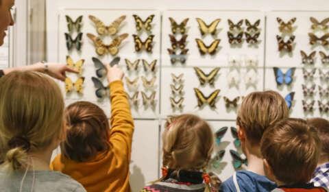 Kinder vor Schmetterlingen